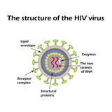 The structure of the AIDS virus. HIV. Vector illustration Royalty Free Stock Photography