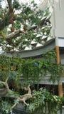 Structure arborescente artificielle, miroirs, toucan Photos libres de droits