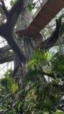 Structure arborescente artificielle, passage couvert en bois Photo libre de droits