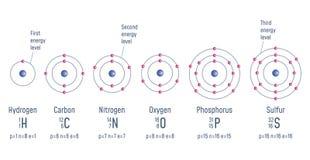 Structure of an Atom. Hydrogen. Carbon. Nitrogen. Oxigen. Phosphorus. Sulfur Atomic Model diagram Vector illustration vector illustration