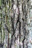 Structure of the bark of the old tree as a natural background. royalty free stock photos