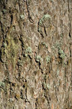 Structure of a bark of a tree Royalty Free Stock Photography