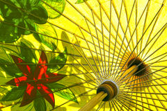 Structure of color painting onf  hand made bamboo wood umbrella Royalty Free Stock Photos