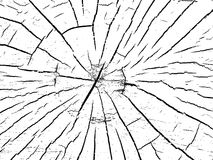 Structure of cracks of wood.  Royalty Free Stock Photo