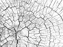 Structure of cracks of wood. Background Stock Photo