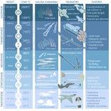 Structure de l'atmosphère terrestre, infographics avec des données Photos libres de droits