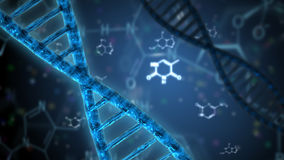 Structure of the dna double helix Royalty Free Stock Image