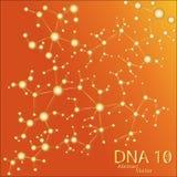 Structure of DNA eps10. Vector elegant  illustration Stock Image