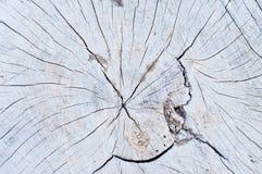 structure en bois de noyau Photos libres de droits