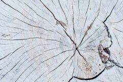 structure en bois de noyau Photo libre de droits