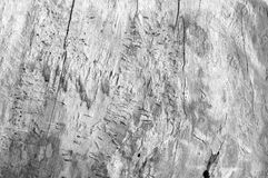 structure en bois de noyau photographie stock