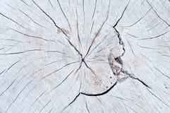 structure en bois de noyau Images libres de droits