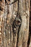 Structure en bois photos stock