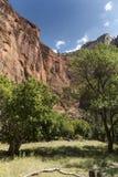 Structure et arbres de roche au temple de Sinawava Zion National Park images stock