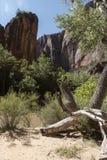 Structure et arbres de roche au temple de Sinawava Zion National Park image stock