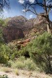 Structure et arbres Zion National Park de roche photographie stock