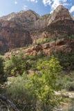 Structure et arbres Zion National Park de roche photos stock