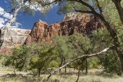 Structure et arbres Zion National Park de roche images libres de droits