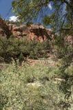 Structure et arbres Zion National Park de roche image stock