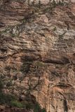 Structure et arbres Zion National Park de roche images stock