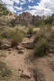 Structure et arbres Zion National Park de roche image libre de droits