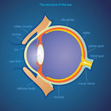 The structure of the eye. The image of the eye. Suitable for medicine and advertising. Vector. All elements on layers Royalty Free Stock Photos