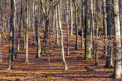 Structure of forest in wintertime Stock Photo