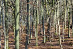 Structure of forest in wintertime Royalty Free Stock Photo