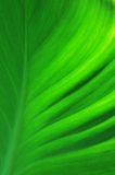 Structure of a green leaf Stock Images