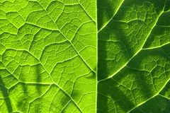 Structure of a green leaf. In garden Royalty Free Stock Photography