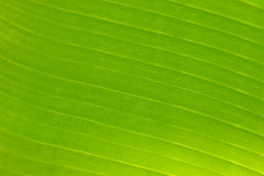 Structure of green leaf Stock Images