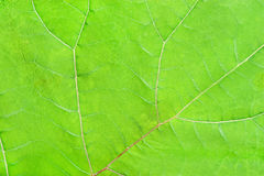 Structure of green leave natural background Stock Photo