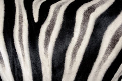 The structure of hide of zebra Stock Photos