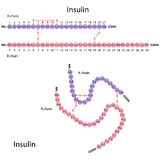 Structure of human insulin Stock Images
