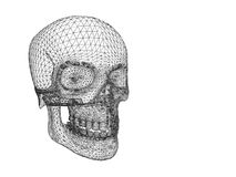 Structure of human skull in perceptive isolated.  Stock Images