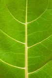Structure of leaf Stock Images