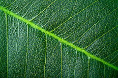Structure of leaf Stock Photo