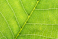 Structure of leaf Stock Photos