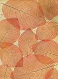 Structure of leaves on an old paper. Royalty Free Stock Image