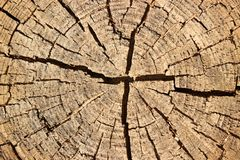 Structure of log Royalty Free Stock Photo