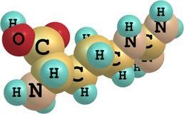 Structure moléculaire d'arginine sur le fond blanc Photos stock