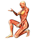 Structure of muscle woman in pose. 3d rendering a woman in kneel-kneeling pose than illustration Royalty Free Stock Photos