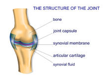 Structure ofthe joint Stock Photos