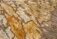 Structure of old beech stem background Stock Photo