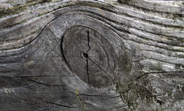 Structure of old board,  a twig and annual rings Stock Photos