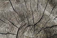 Structure of old cutting log Royalty Free Stock Photo
