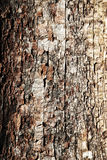 The structure of old decayed wood Royalty Free Stock Photo