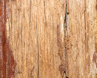 Structure of an old planed board with traces of paint and dirt. Wood with defects stock photo