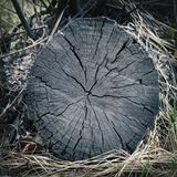 Structure of the old tree close-up stock photo
