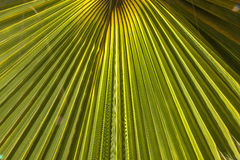 Structure of palm tree in morning Royalty Free Stock Photo
